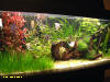 Acquario Tropical World